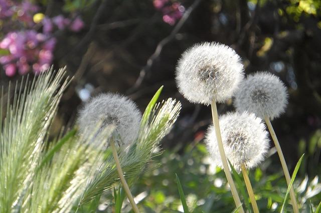 flower-1355902_640