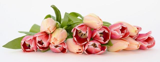 tulips-2152975_640